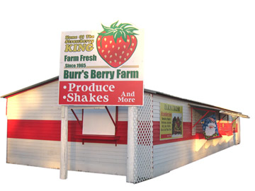 Burr's Berry Farm - the best strawberries
